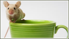 Mouse on Cup